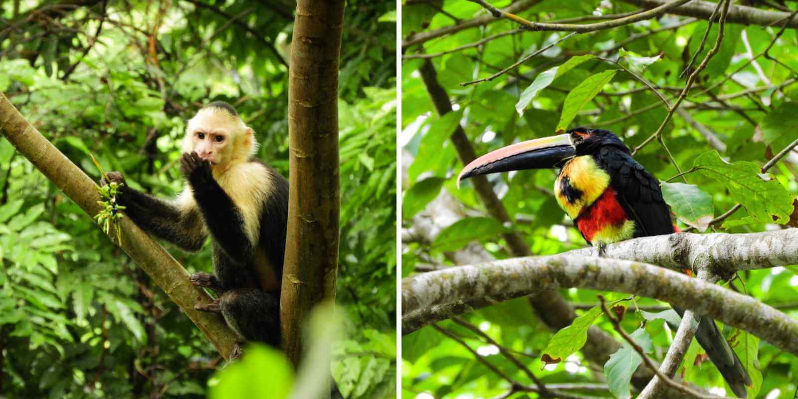 Manuel Antonio National Park - Wildlife