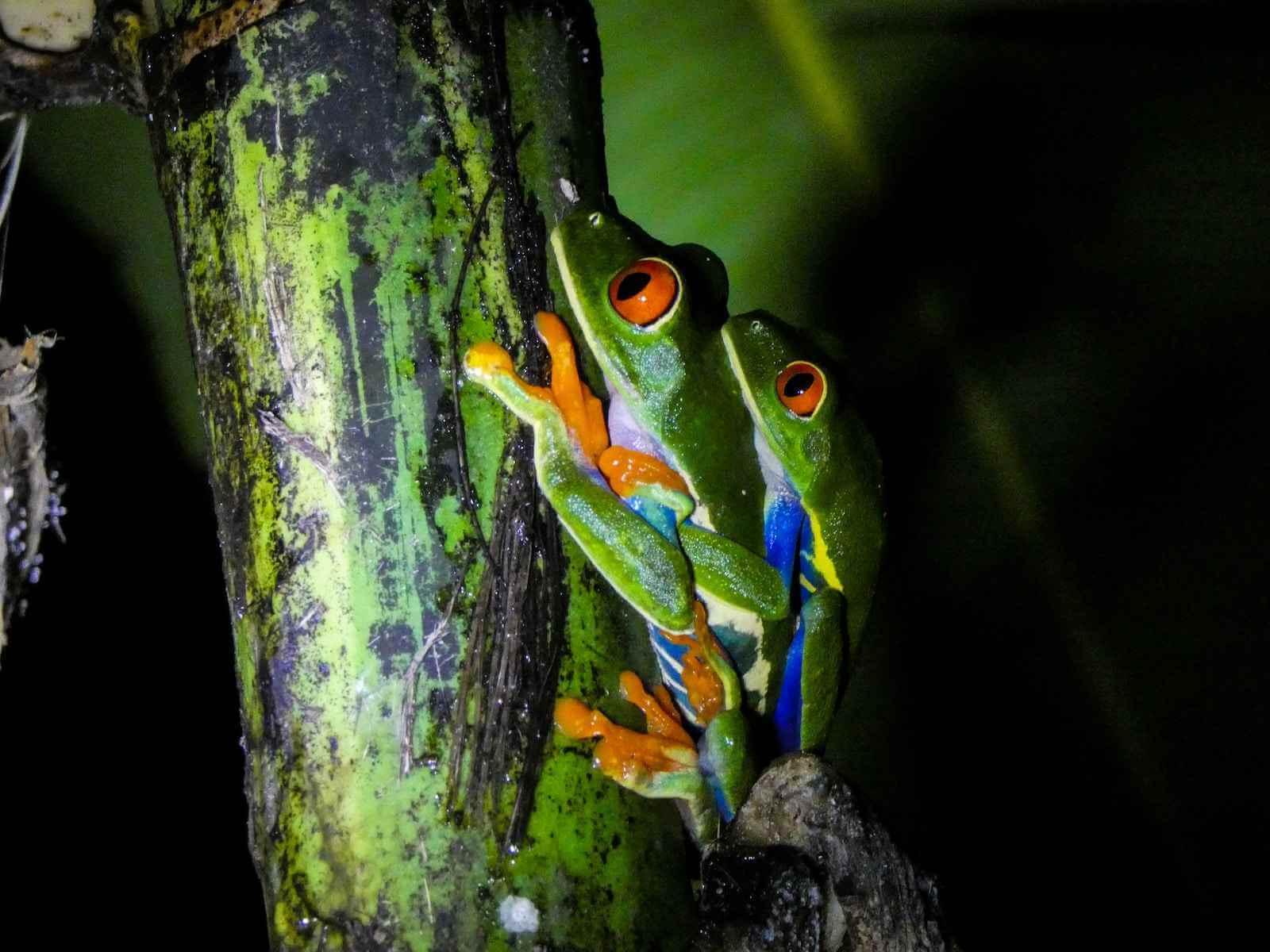 night tour monteverde