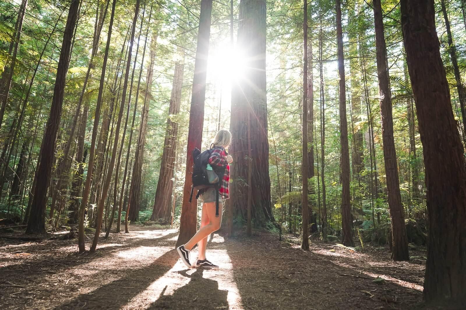 Redwoods - Wandel boven de boomtoppen