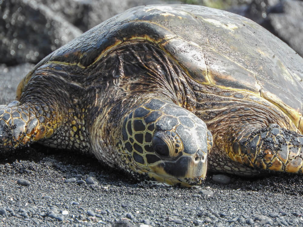 Zeeschildpadden - Op verschillende plekken te spotten