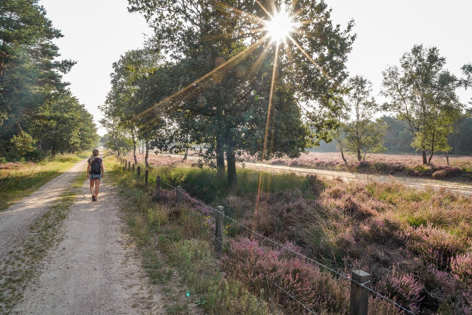 Wandelen over de Veluwe - by NOMADS